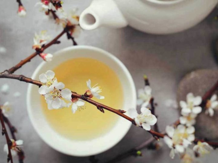 White Tea: Benefits, Side Effects and How To Make White Tea