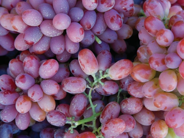 Surprising Grapes Nutrition Facts That You Should Know