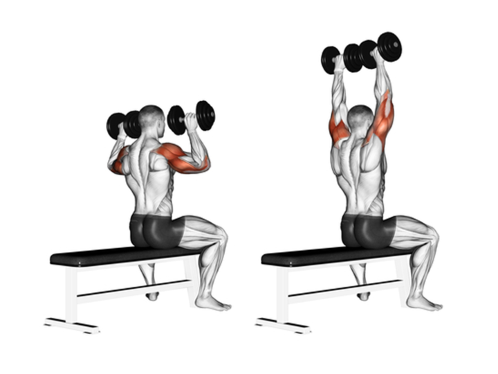 10 Shoulder Workouts For Beginners